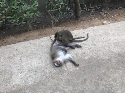 2017 - Vietnam - Dao Khi Can Gio Monkey Island