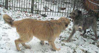 Snow Play Dec 2007