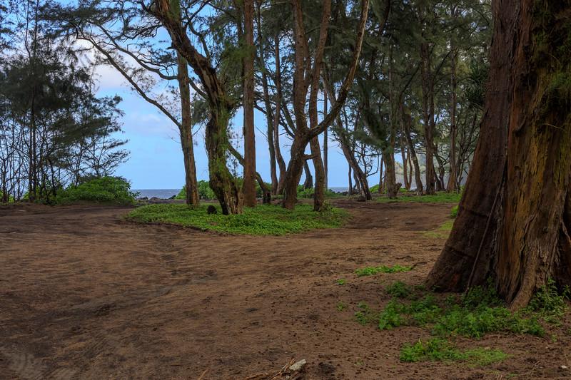 Beautiful Hawaii-18.jpg