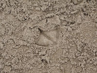 20100804 Goose Scat & Gull Tracks
