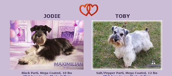 Jodie & Toby Puppies, DOB 7/03/2020