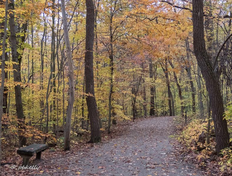 fall color 110517-2.jpg