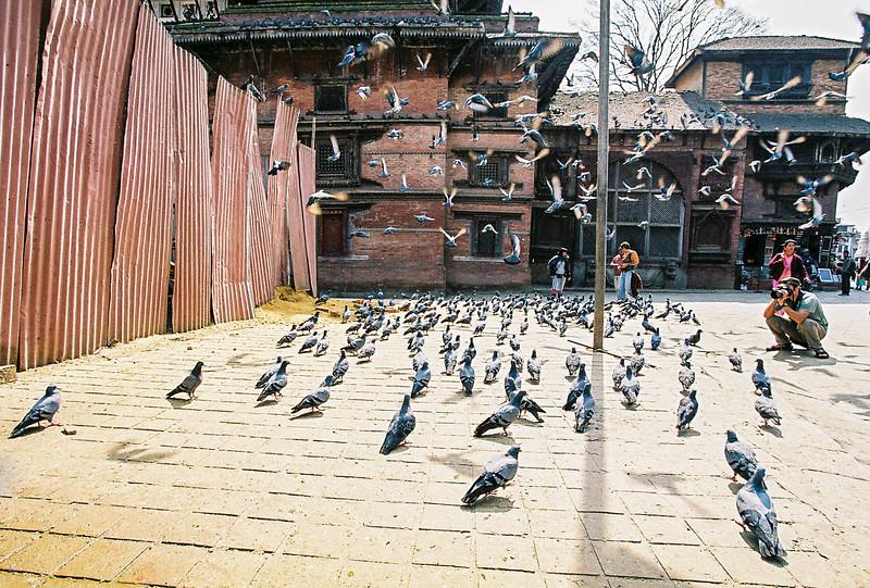 Pigeons take flight in Durbar Square, Kathmandu