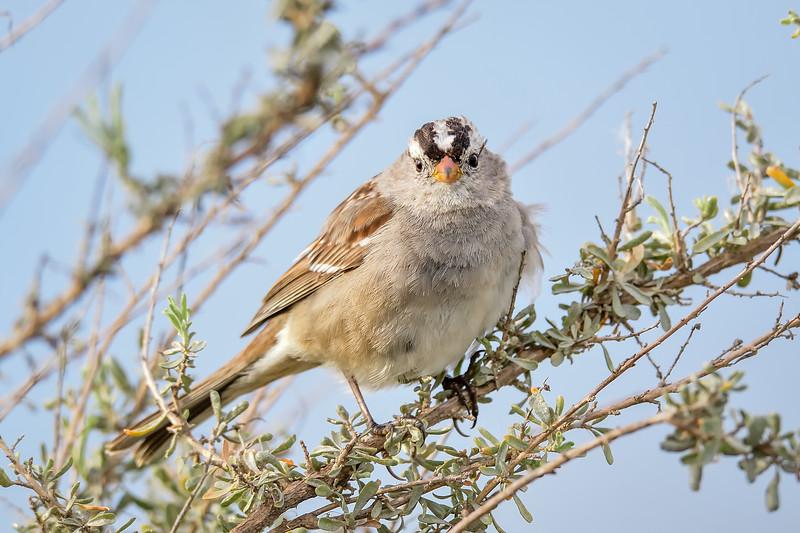 San Luis National Wildlife Refuge - Los Banos, CA USA
