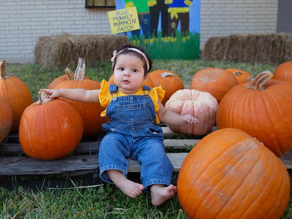 Pumpkin Patch - Oct 2020