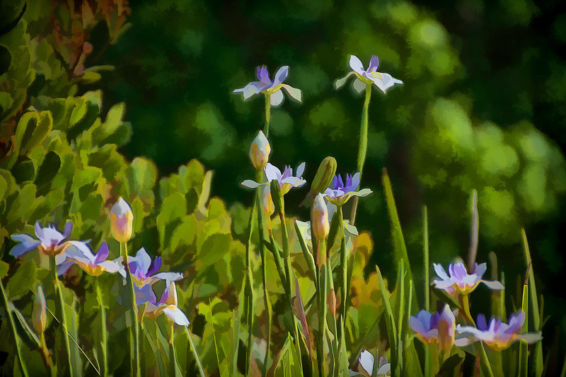 may 11 - springtime flowers.jpg