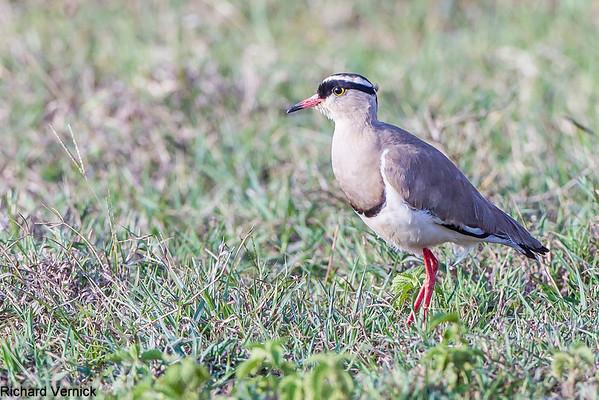 Africa 2012 Safari