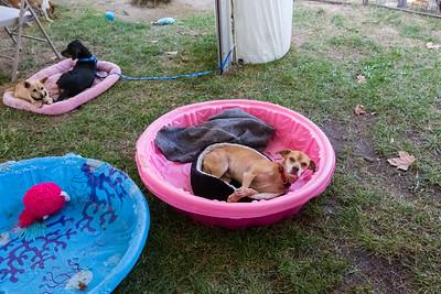 Bay Area Pet Fair