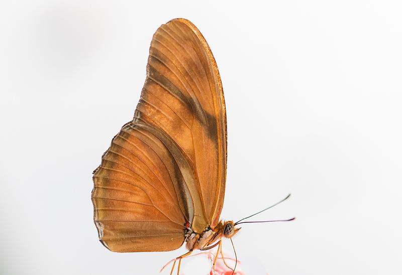 Butterfly 28.jpg
