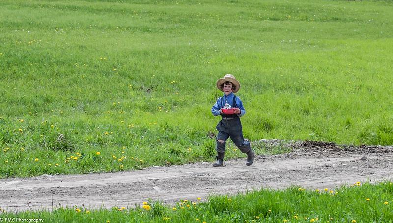 Amish Farm 2, Upstate NY (1 of 1).jpg