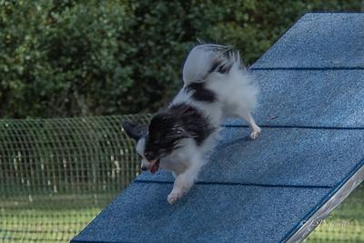 Jumpers Saturday
