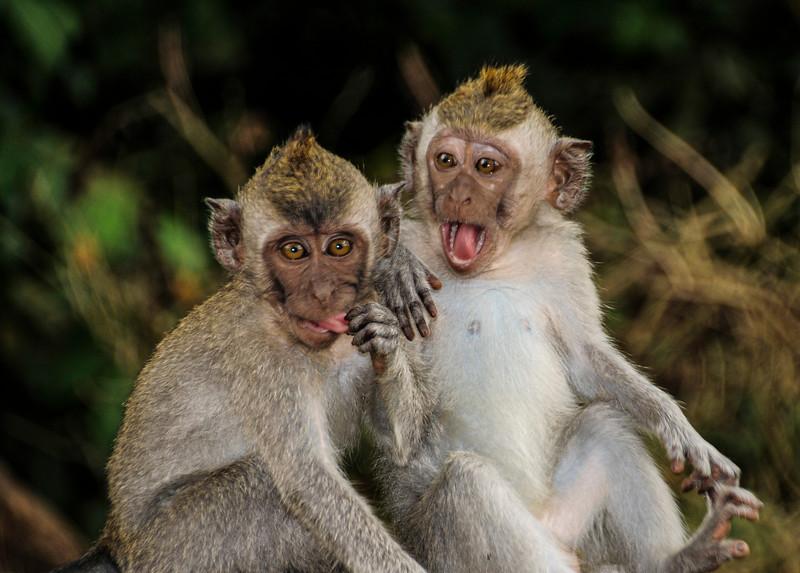 Bali Monkeys-8.jpg