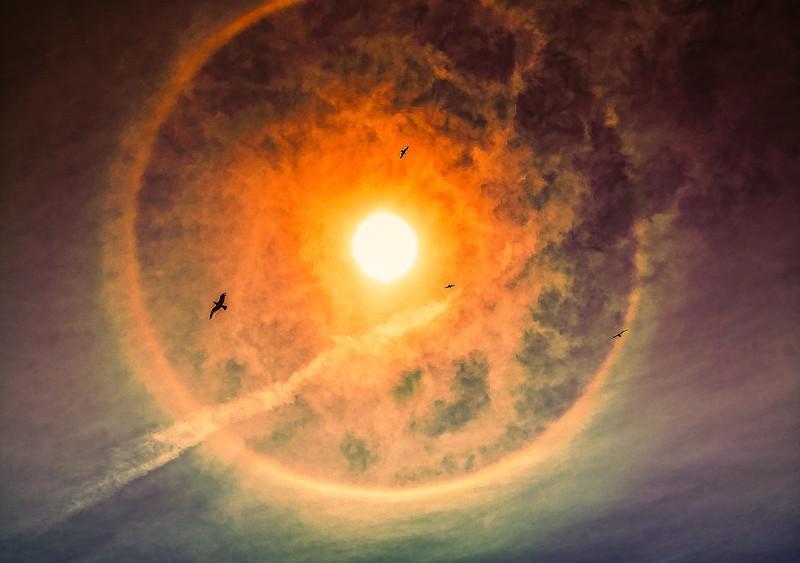 sun dawg seagull2.jpg