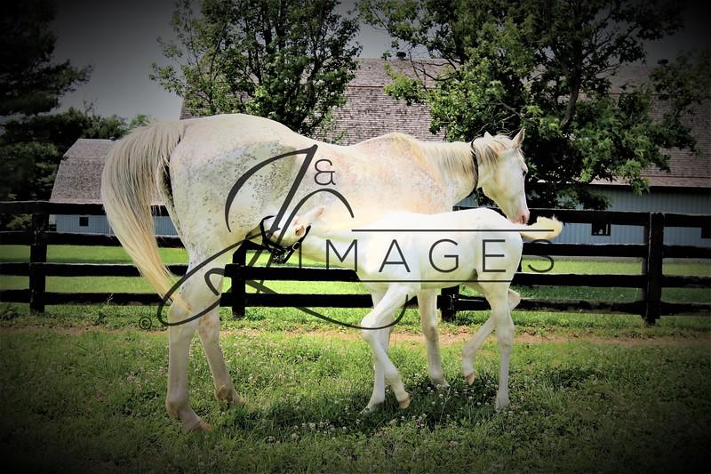 Megson Farms - Thoroughbreds of Distinction