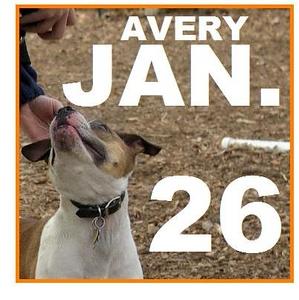 26 JANUARY (avery)