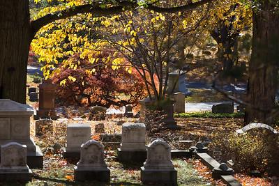 Mt. Auburn Cemetery, November 2015