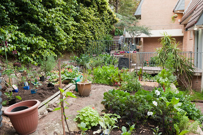 Julie's Garden