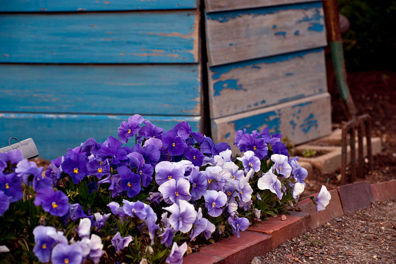 How can you NOT smile at the pansies?!?!?!?