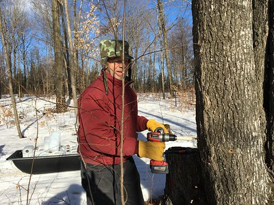MAPLE SYRUP MARCH 2019