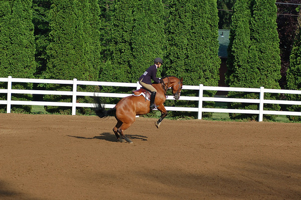 2010 Horse Show