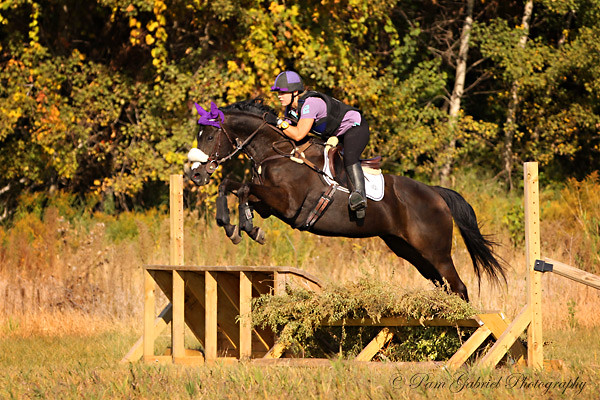 Horse Shows and Events