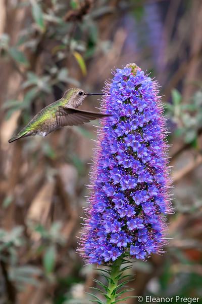 Chasing Hummingbirds