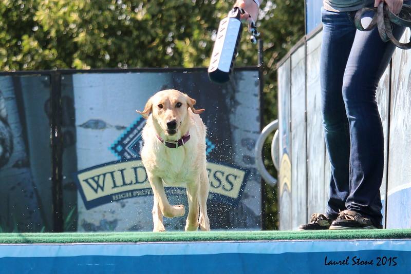 2015.8.5 Winnebago County Fair Dock Dogs (30).JPG