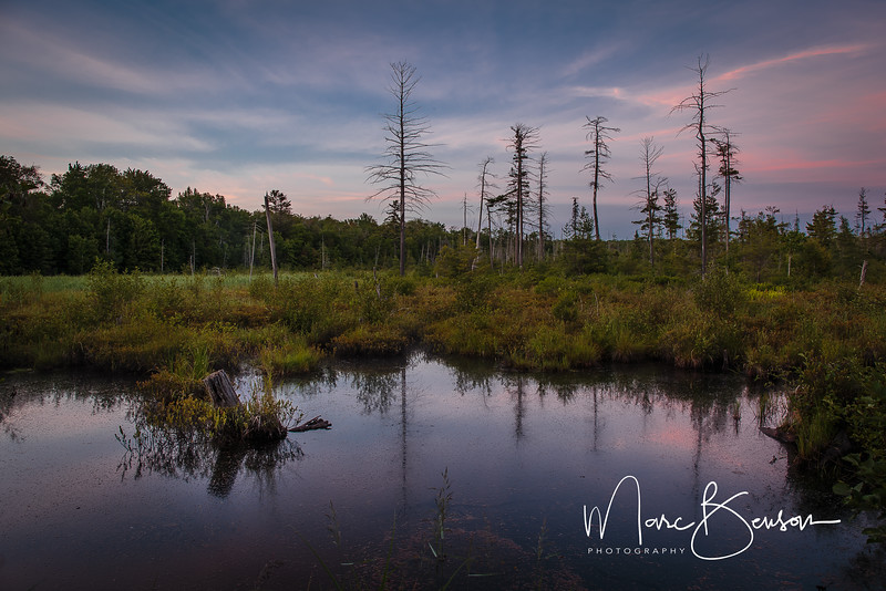 Killbear Marsh