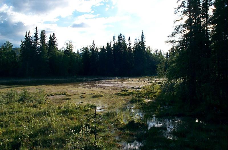 Wetlands surrounding hotsprings