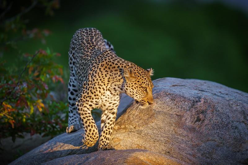 LeopardHills-20191029-2476.jpg