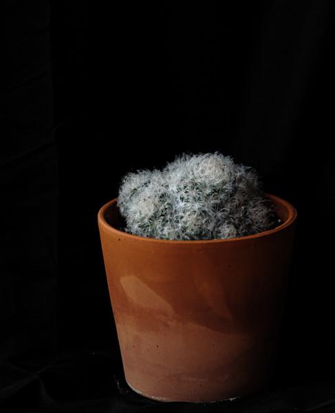 cactus-8815.jpg