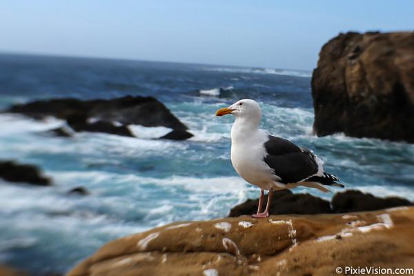 Big Sur & Monterey January 2016