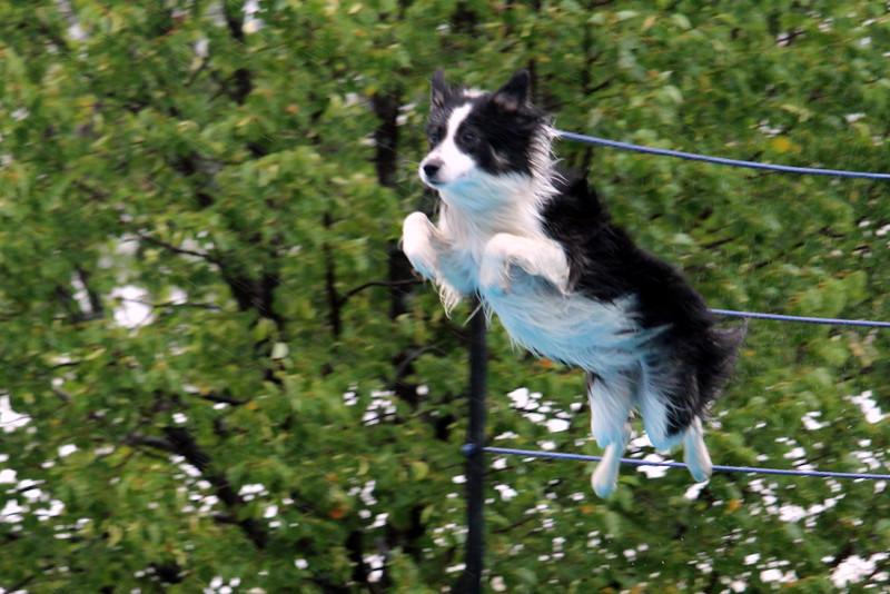 2015.8.7 Winnebago County Fair Dock Dogs (20).JPG