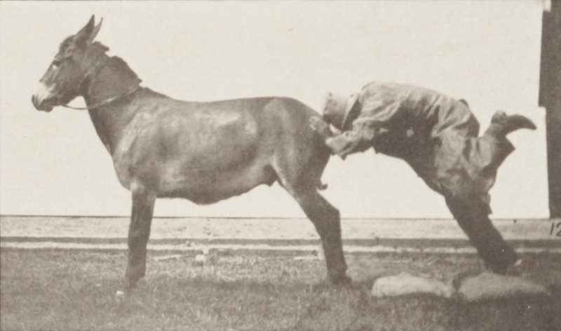 """Horse """"Denver"""", refractory with trainer"""