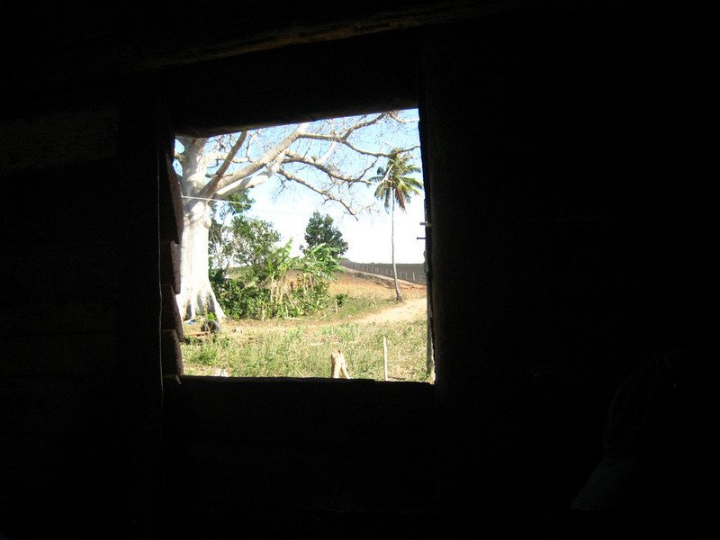 Looking out at a ceiba tree (we saw them in Guatemala)