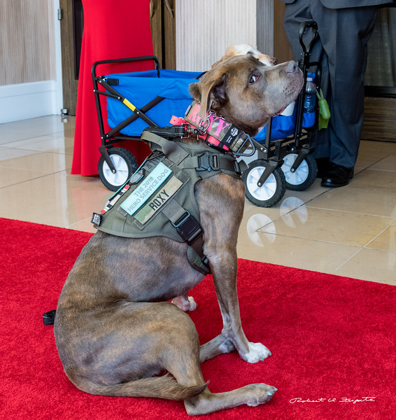 Pre Red Carpet photo ops -  Roxy, the Hero Service Dog