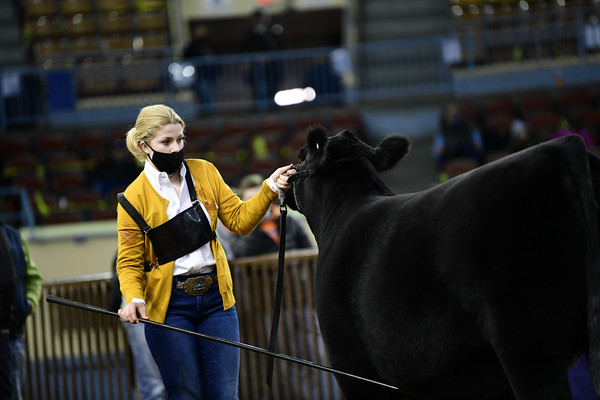 Junior Heifer Calf Division 5