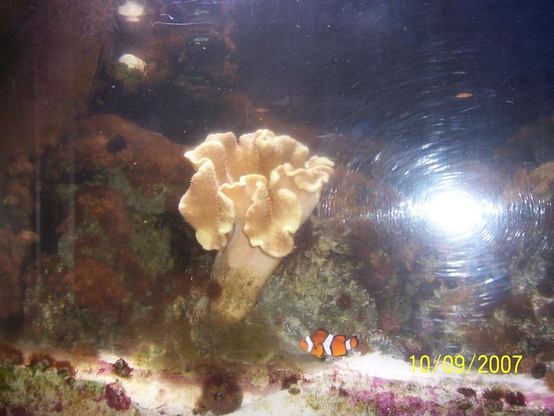 Fishtank 014b.JPG
