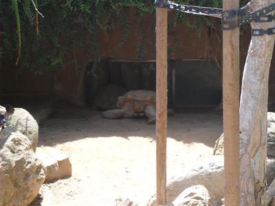 San Diego Zoo Aug.30th