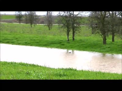 2019-02-27 South Fork Putah flooding