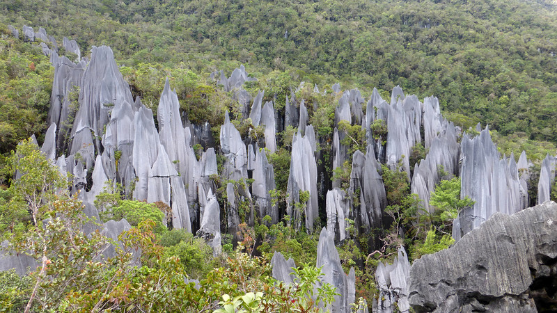 Headhunter's and Pinnacles Trek, Borneo (May 2-4, 2014)