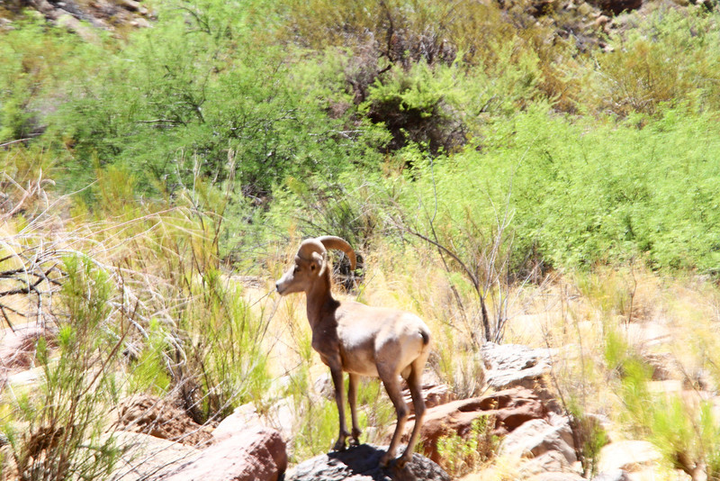 2014_Grand_Canyon_WHDW2_7D 25