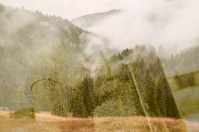 fog covering pine tree forest in green summer mountain landscape