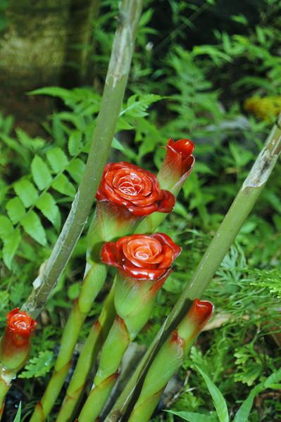 137- 20080410- Hawaii 15- Enroute to Hilo- Hawaii Tropical Botanical Gardens DSC_2653.jpg