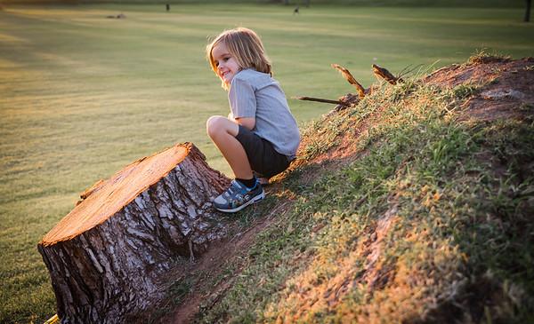 Tree Stump & Sunset