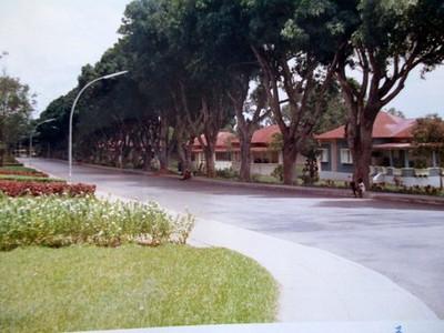 Rua das mangueiras em frente ao museu