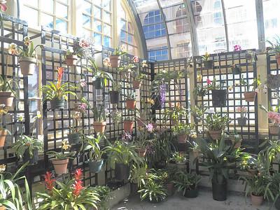 Rawlings Conservatory - Feb 2016