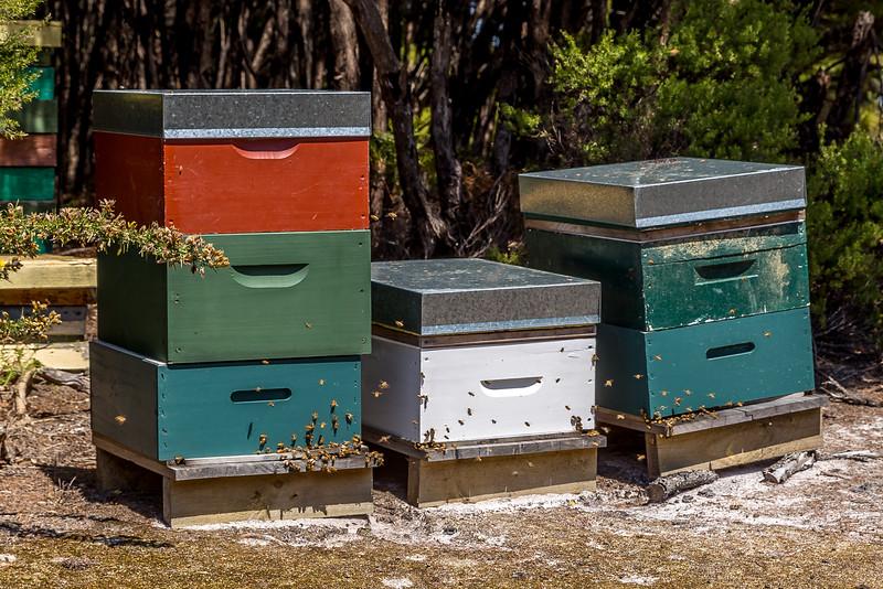 Sie liefern den Honig für mein Morgenessen