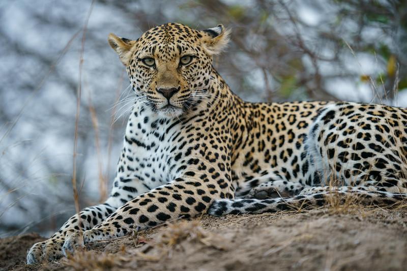 LeopardHills-20180929-0281.jpg