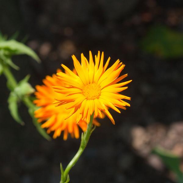 2009 06 30_NY Botanical Gardens_0756_edited-1.jpg